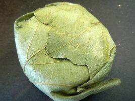 柏の葉に包まれた「みらさか・シェーブル」をやっと見つけた